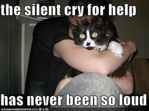 funny-pictures-silent-cry-for-help-cat